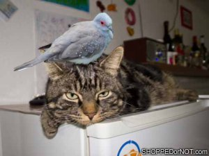 cat-and-dove-shopped-or-not